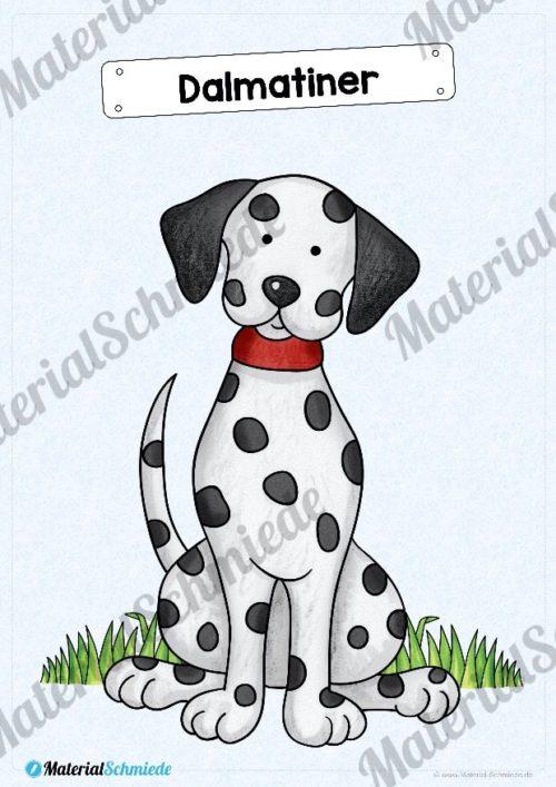 35 Flashcards Hunde & Hunderassen (Vorschau 03)