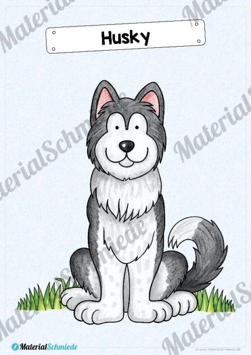 35 Flashcards Hunde & Hunderassen (Vorschau 04)