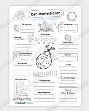 Steckbrief Marienkäfer