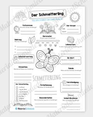 Steckbrief Schmetterling